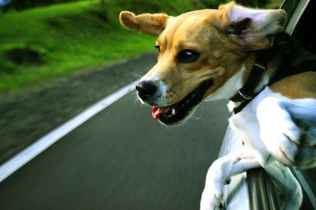 Dog euphoria